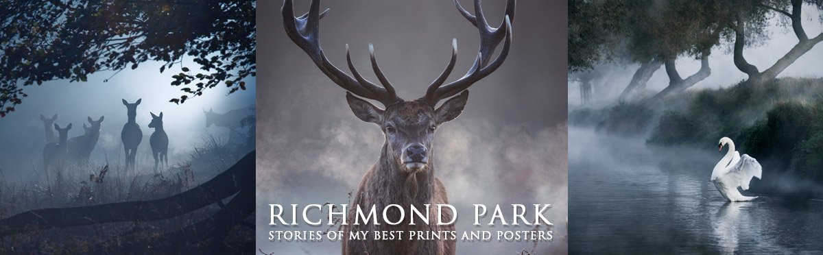 RIchmond Park - Stories of my best Prints and Posters