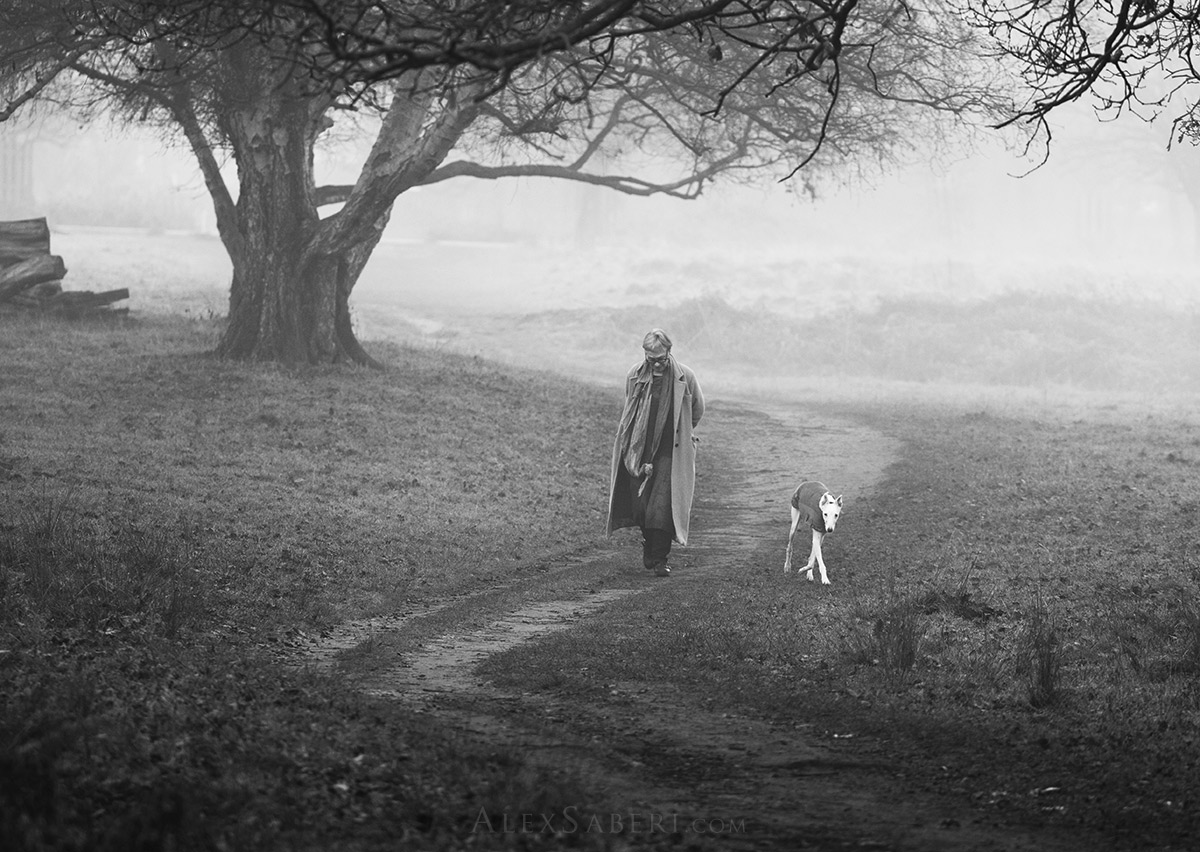 A lady takes her whippet for a walk in Richmond Park.