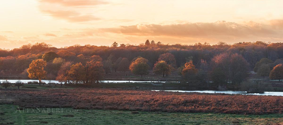 Richmond park autumn sunset photo print
